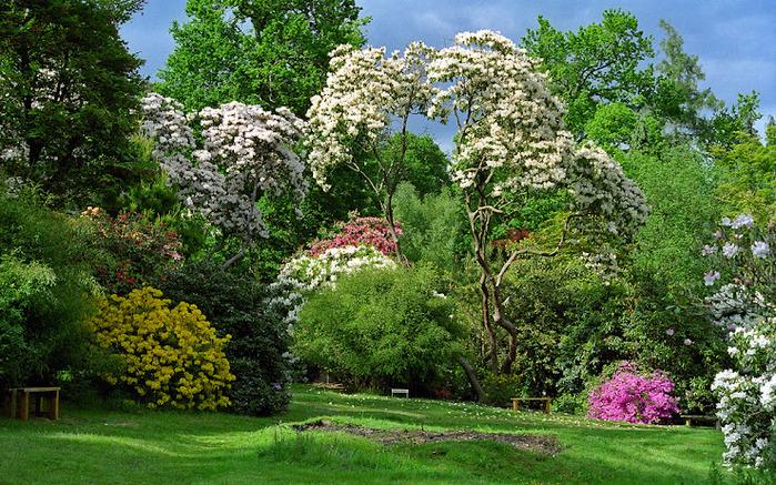 Leonardslee Gardens (Леонардсли – Гарденз) 5.jpgСад Леонардсли, Англия (700x437, 256Kb)