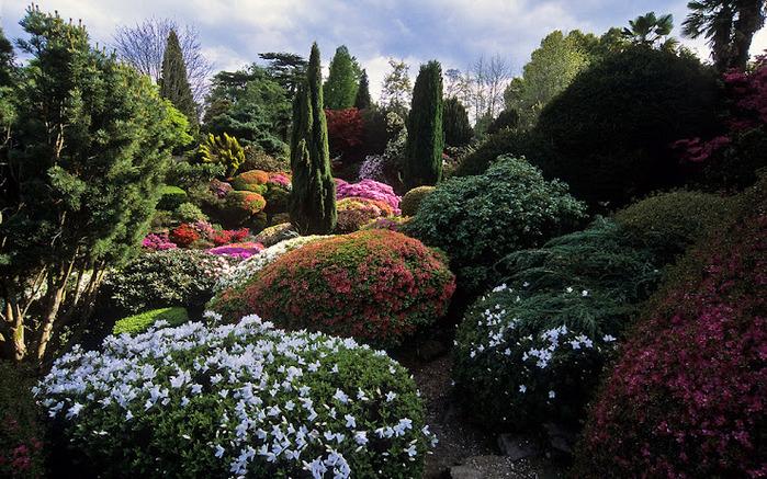 Leonardslee Gardens (Леонардсли – Гарденз) 08.jpgСад Леонардсли, Англия (700x437, 199Kb)