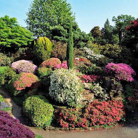 Leonardslee Gardens (Леонардсли – Гарденз) 10.jpgСад Леонардсли, Англия (462x462, 192Kb)