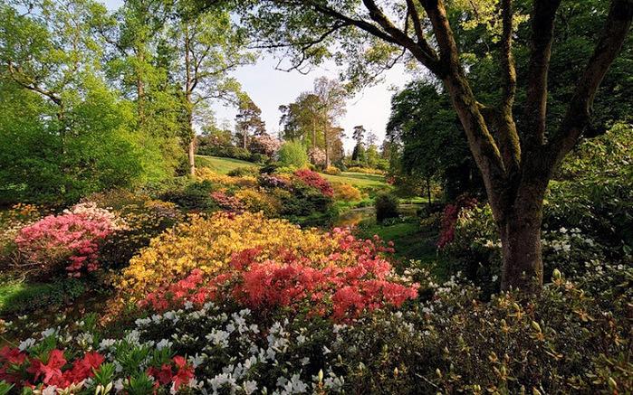Leonardslee Gardens (Леонардсли – Гарденз).jpgСад Леонардсли, Англия (700x437, 230Kb)