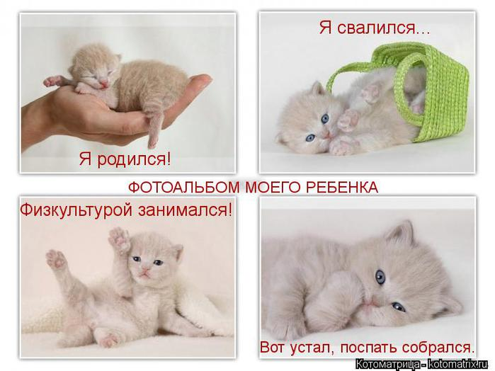 kotomatritsa_hY (700x524, 45Kb)