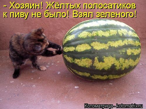 kotomatritsa_kG (500x375, 44Kb)