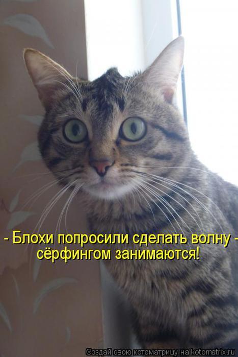 kotomatritsa_Nz (467x700, 39Kb)
