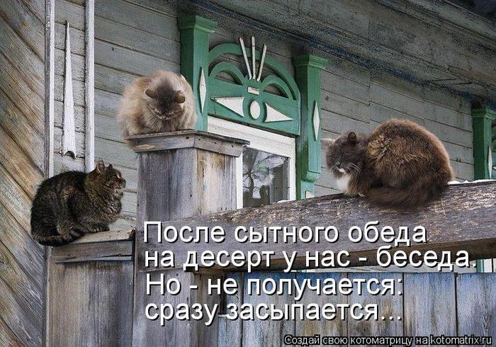 kotomatritsa_ty (700x490, 93Kb)
