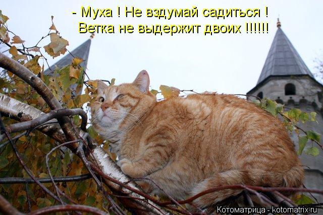 kotomatritsa_w (640x427, 60Kb)