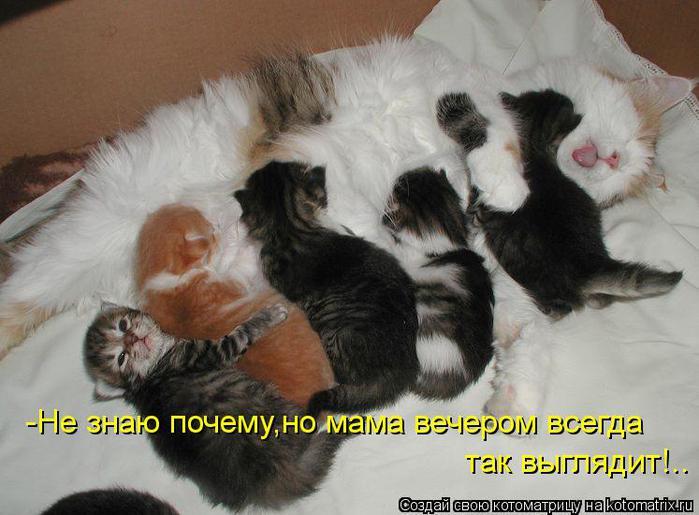 kotomatritsa_zp (700x515, 53Kb)