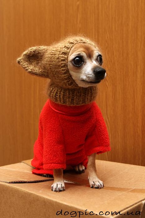 Смешные картинки собак 5