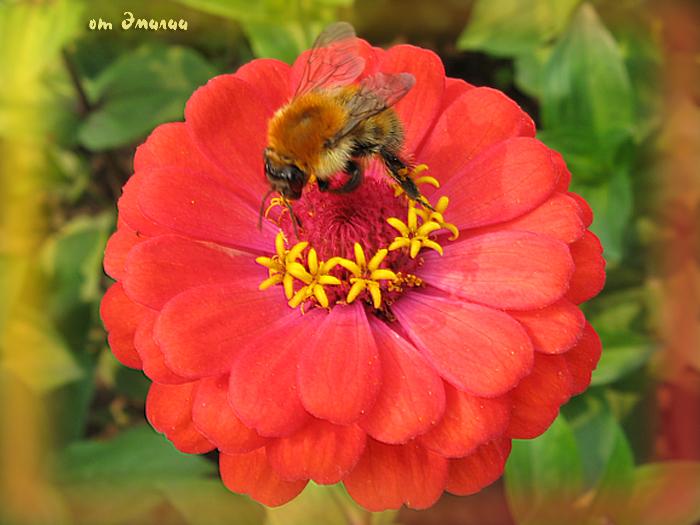 Пчела от Эмилии (700x525, 337Kb)
