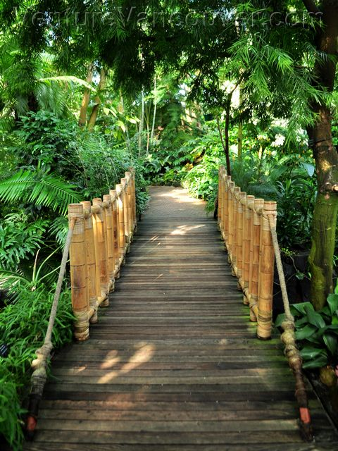 bloedel-conservatory-wooden-bridge-pathway-page (480x640, 97Kb)