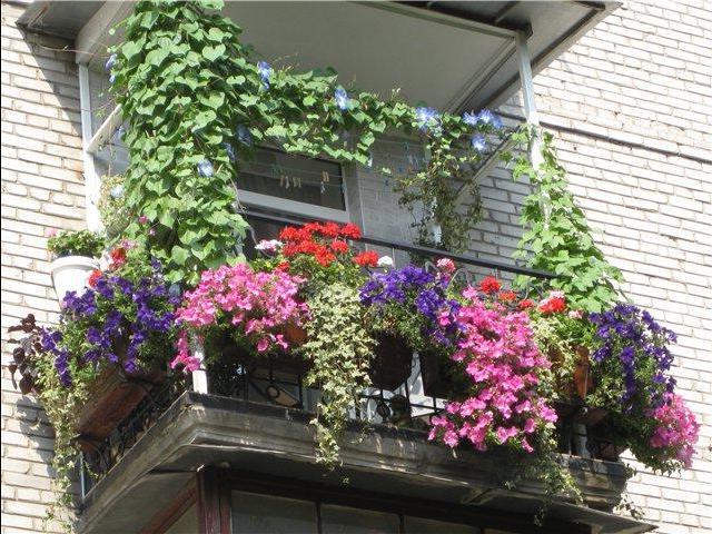 Оформление балкона цветами может быть абсолютно разным. все .
