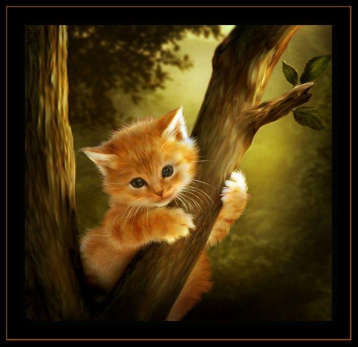 котик рыжий (700x678, 61Kb)