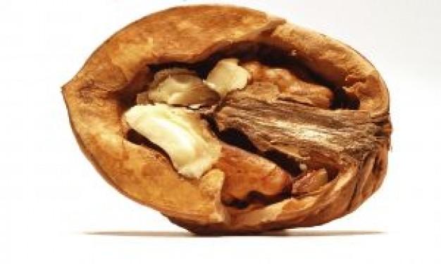 грецкий орех (626x375, 45Kb)