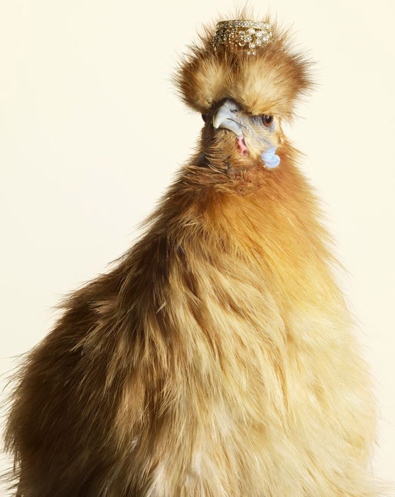 Luxury-Chicks-1 (556x700, 110Kb)