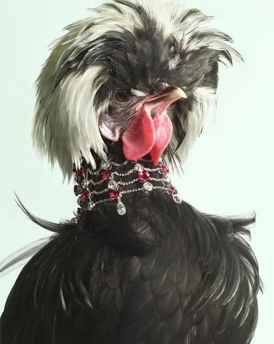 Luxury-Chicks-5 (557x700, 115Kb)