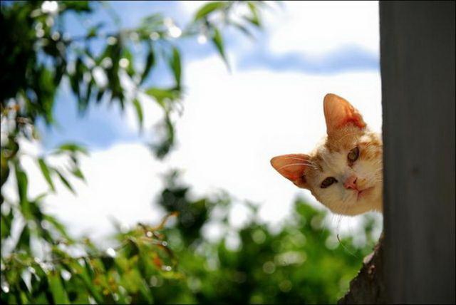 Братья наши меньшие, милые фотографии, фотографии кошек и собак
