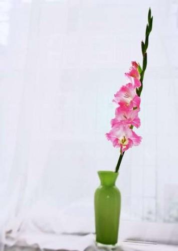 flowers-355x500 (355x500, 18Kb)