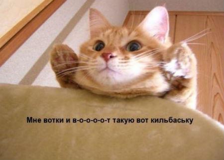 20122607134046 (450x321, 19Kb)
