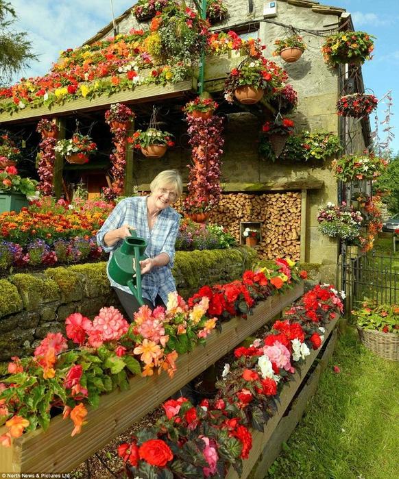 красивые цветы фото (582x700, 440Kb)