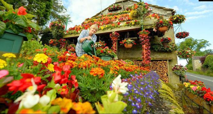 красивые цветы фото 1 (700x374, 69Kb)