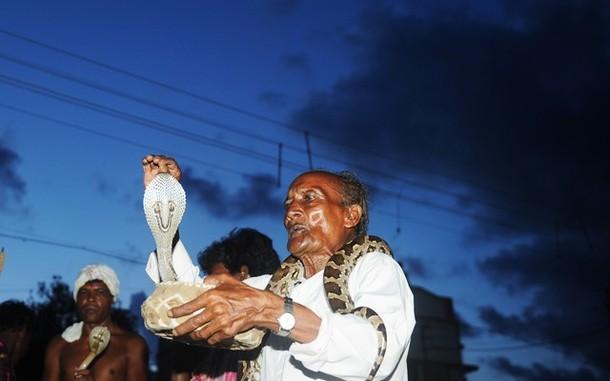 Заклинатели змей продемонстрировали своё мастерство, Бишнупур, 17 августа 2012 года