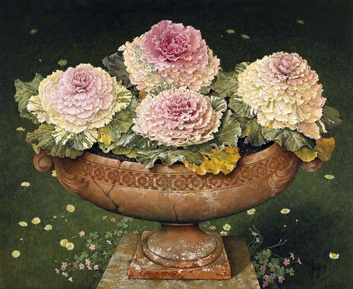 ornamental cabbages 91 x 106cm copy 2 (700x574, 165Kb)
