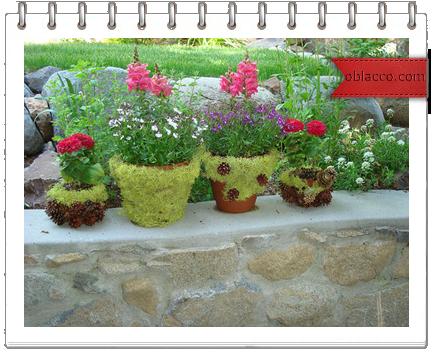 Как вырастить мох на цветочном горшке/3518263_vj (434x352, 306Kb)