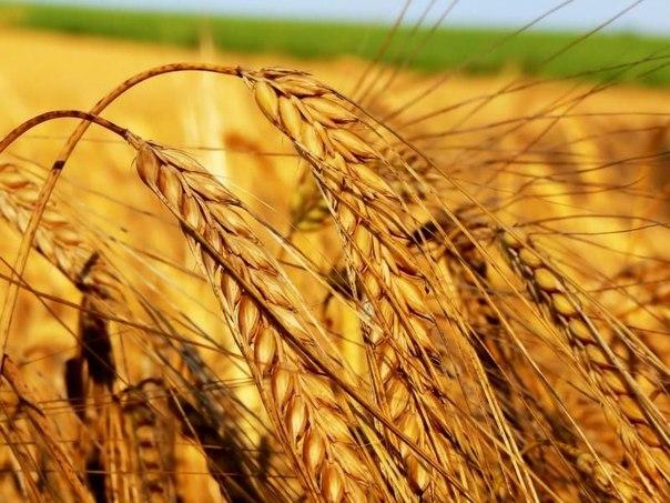 Николай Федоров против введения эмбарго на экспорт зерна в России в 20 ...