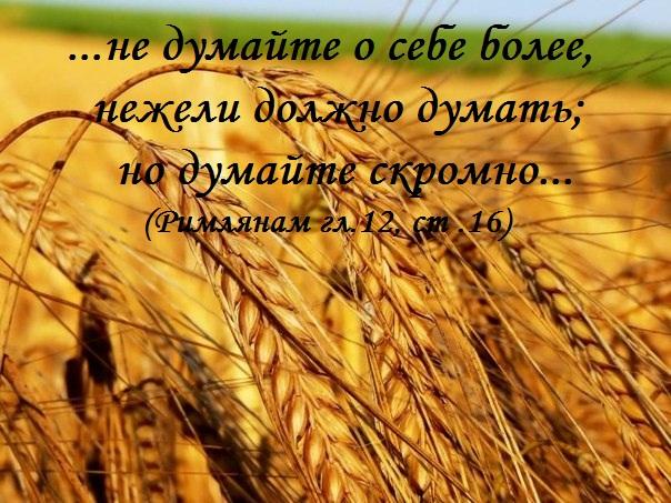 90647019_large_UndVFyyIPw_kolosya1 (604x453, 136Kb)