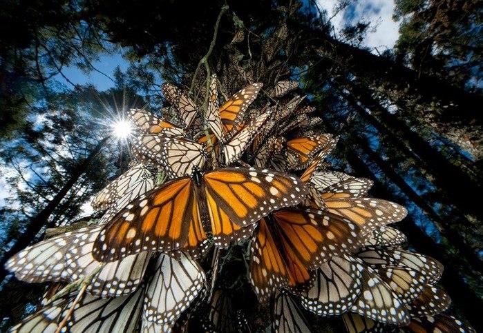 бабочка (700x483, 130Kb)