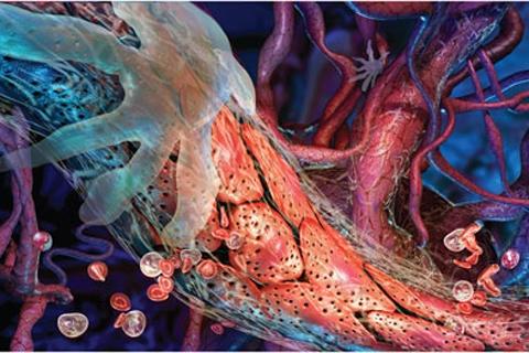 здоровье сосуды мозга1 (480x320, 158Kb)