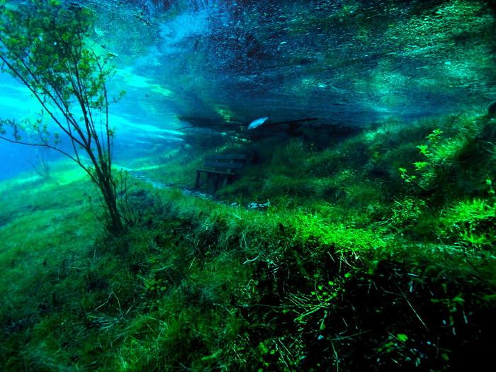парк под водой (700x525, 193Kb)