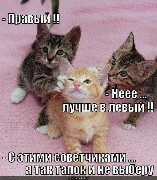 tapok-ne-vyberu_1335523914 (500x574, 79Kb)