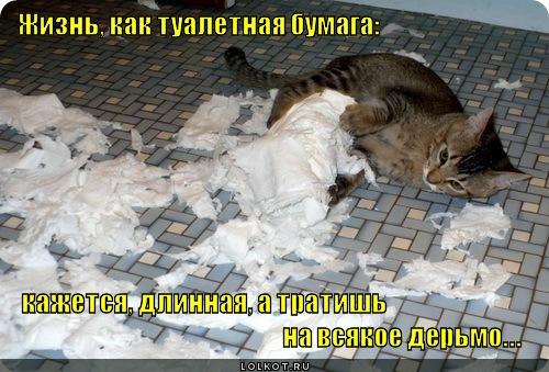 tualetnaya-bumaga_1339039549 (500x339, 80Kb)