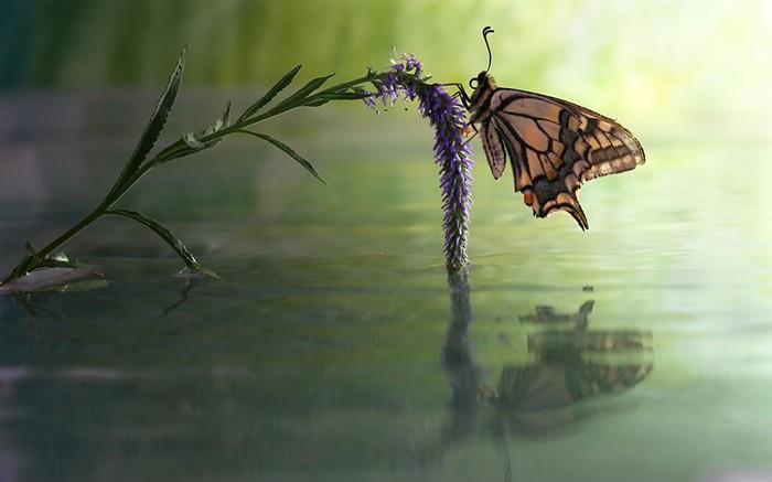 бабочка фото (700x437, 45Kb)