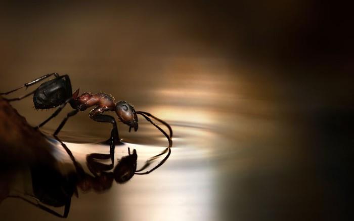 муравей фото (700x437, 32Kb)