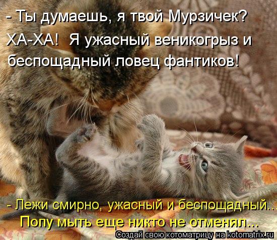 kotomatritsa_2E (550x476, 73Kb)