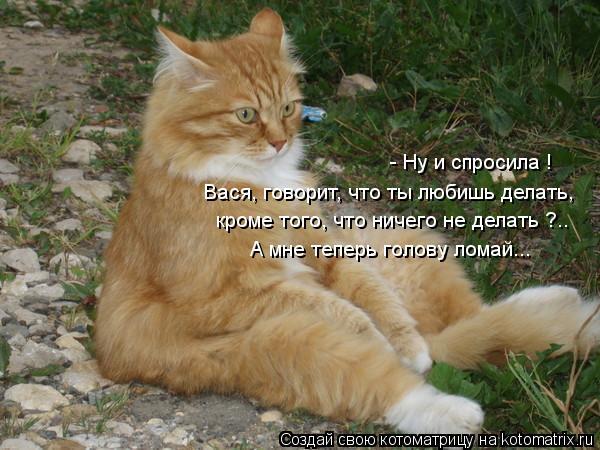 kotomatritsa_ci (600x450, 57Kb)