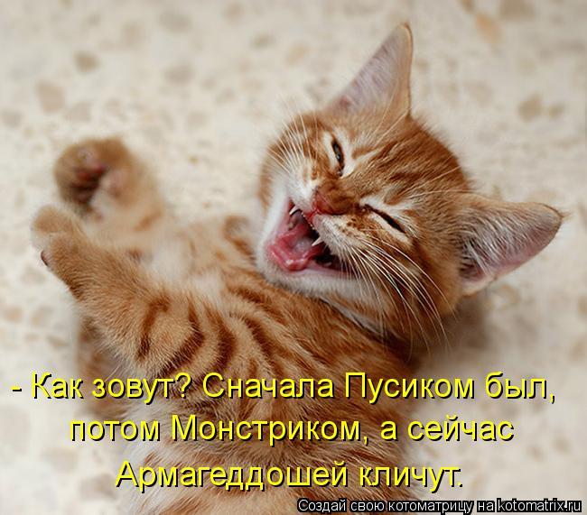 kotomatritsa_i (650x571, 64Kb)