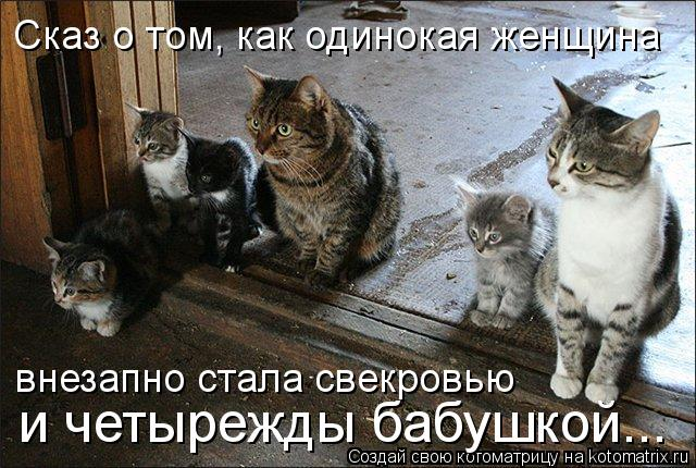 kotomatritsa_JC (640x430, 75Kb)