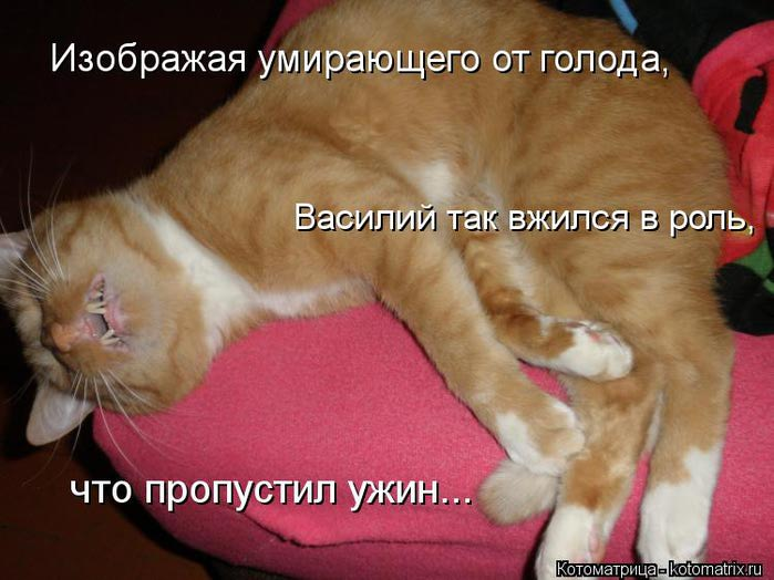 kotomatritsa_nO (700x524, 54Kb)