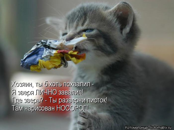 kotomatritsa_Vn (700x524, 41Kb)