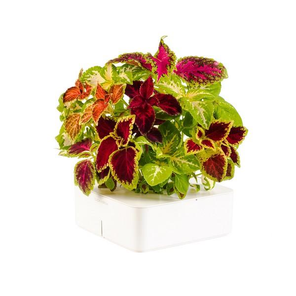 электронный горшок для цветов Click and Grow (600x600, 61Kb)