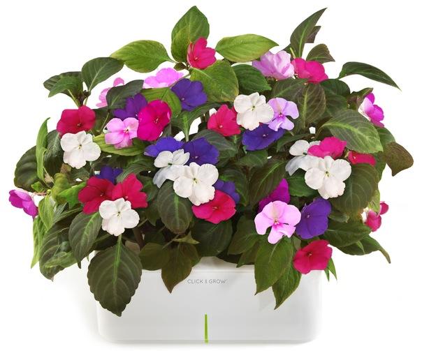 электронный горшок для цветов Click and Grow 2 (604x503, 85Kb)