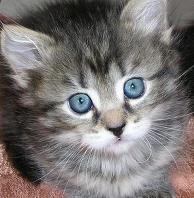 Котёнок ув (380x387, 56Kb)
