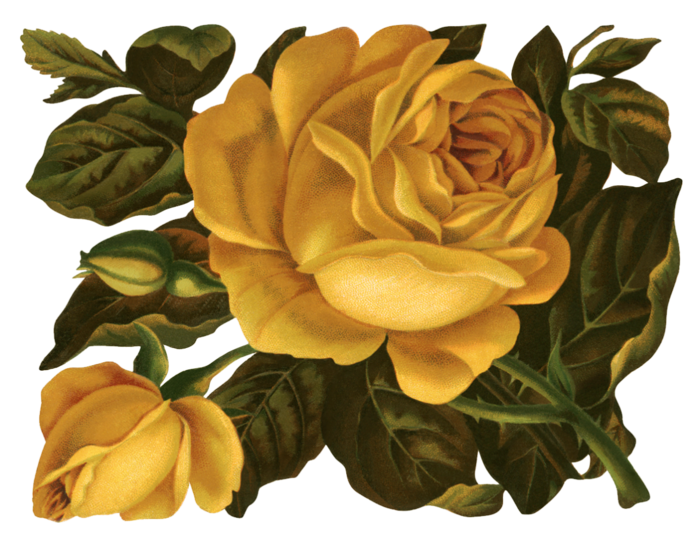 Valley_of_Roses_emb_015 (700x538, 570Kb)
