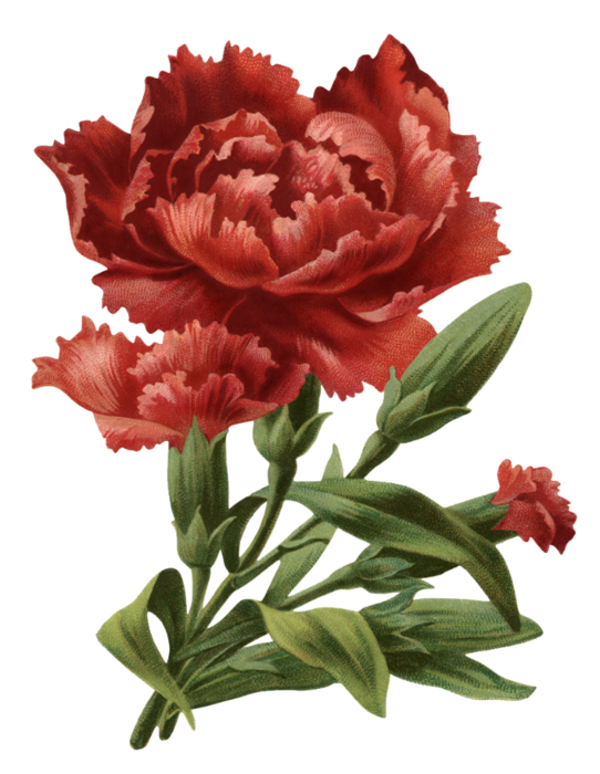 Valley_of_Roses_emb_017 (542x700, 460Kb)