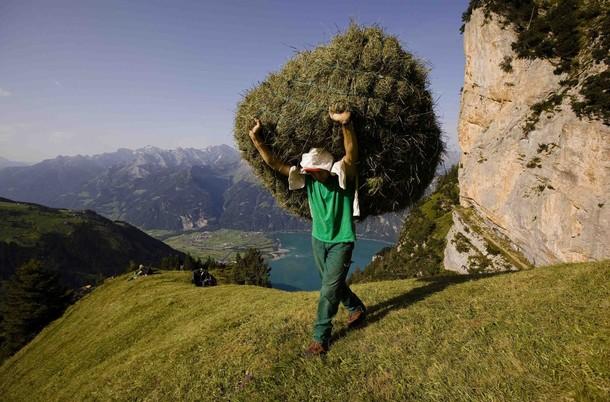 Дикий сенокос близ швейцарской деревни Флюелен, 21 августа 2012 года