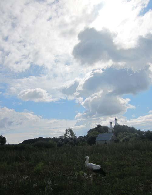 20 Аист в полях на фоне  монастыря (501x640, 56Kb)