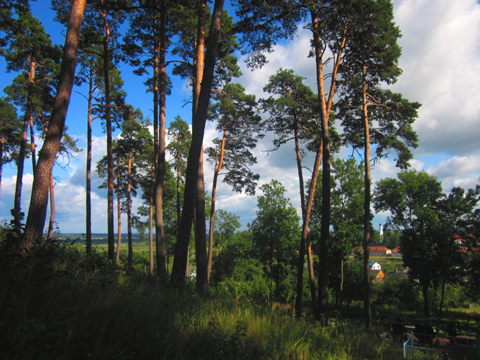 31 Жировичи кладбище 7 (700x525, 166Kb)