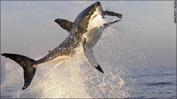 3411002_shark02 (615x345, 59Kb)